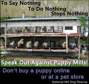 against-puppy-buying-from-petstore