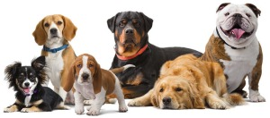breed-info-dogs