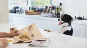 dog-asking-food