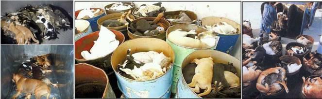 euthanized-animals