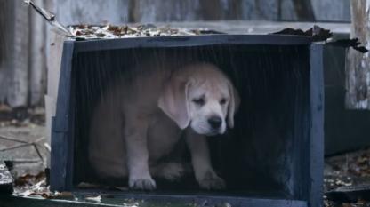 puppy-left-behind